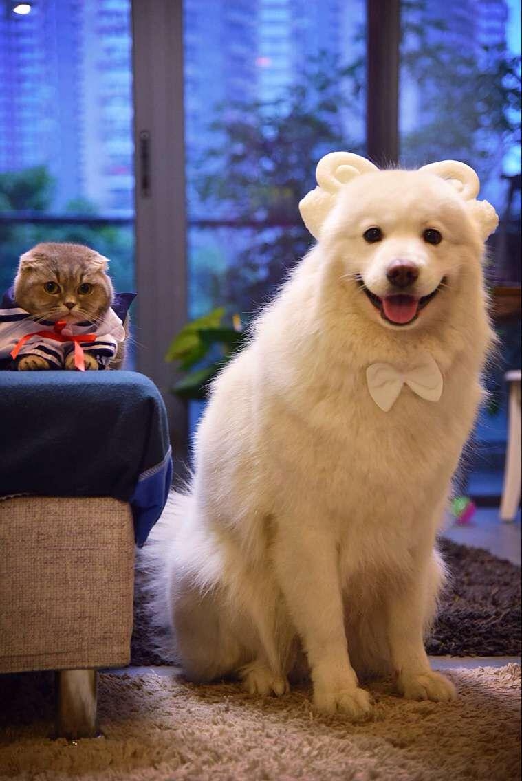 属狗的和什么属相最配 属狗的属相逐月婚配表
