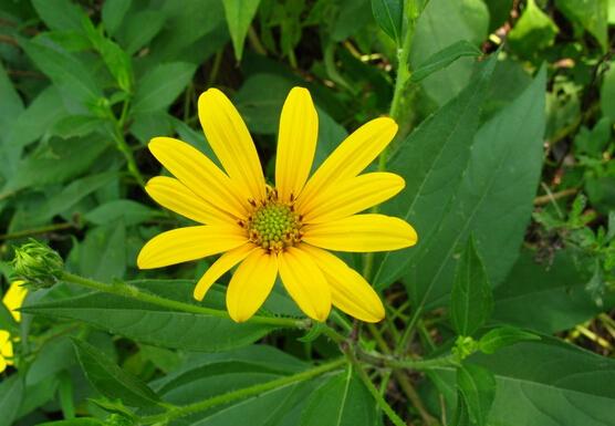 秋天开的花有哪些 秋天种什么花