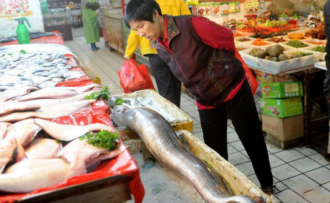【图】海鳗鱼营养价值知识分析