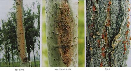 树木白蚁防治方法有哪些?