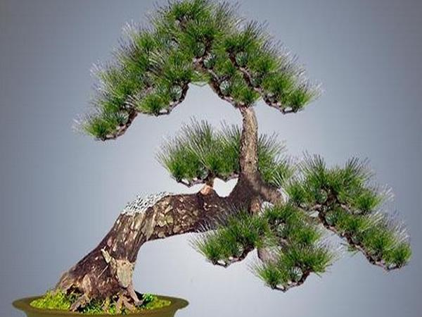 手工制作筷子树
