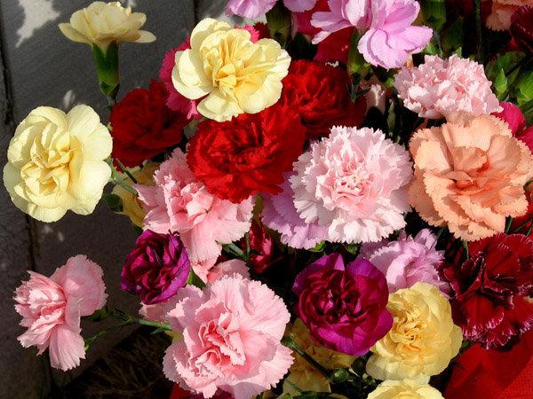 钱花折法 玫瑰花 步骤