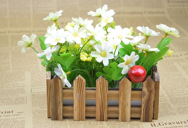 【圖】養花的福利!阿司匹林在盆花中的應用及作用