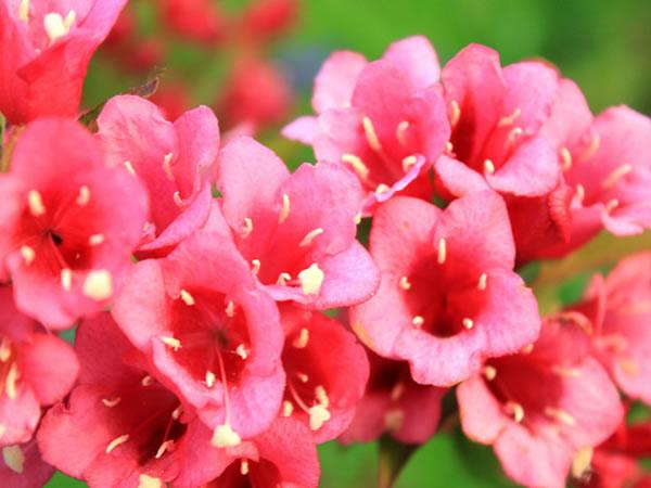 小树春天开花动图