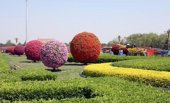 花坛设计图是根据道路的宽窄和花坛的作用来设计的,一般是60-80