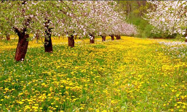 【春分】春分是什么意思_春分节气的习俗有哪