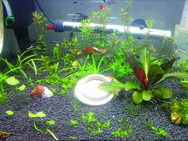 生态鱼缸制作步骤