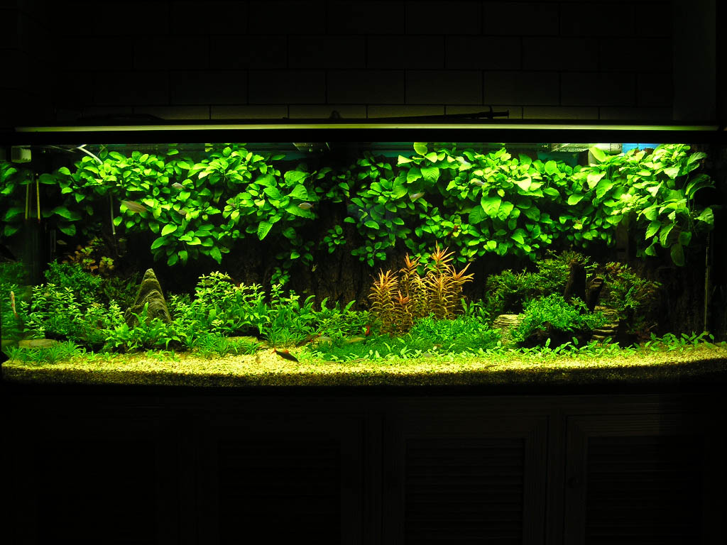风景弧形鱼缸图片大全