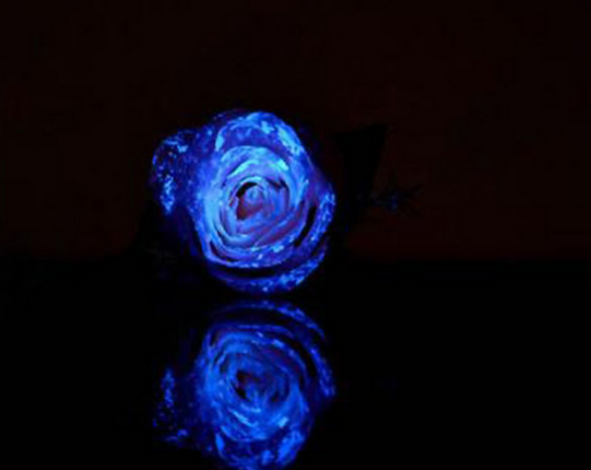 夜光玫瑰花,想想都觉得非常漂亮是不是!今天,保障网教大家一种很强的方法来做夜光玫瑰,发出的光亮更有真实感。    一 夜光玫瑰需要材料:    1.夜光粉,一种可以蓄光,并在黑暗中发出光亮的粉末。   2.光油(或者透明胶水、透明指甲油、透明油墨来代替)   3.笔刷。   4.