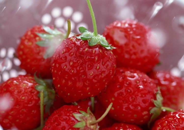 草莓果实结构图讲解