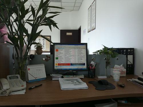 办公桌摆放什么植物风水好