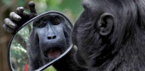 爱美之心猴也有:黑冠猴摩托车照镜子 可爱逗趣十足