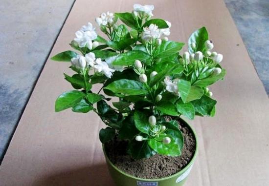 我的植物朋友_我的植物朋友仙人掌!