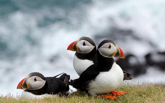 【图】去冰岛旅游吧!他是地球上最像外星球的国度