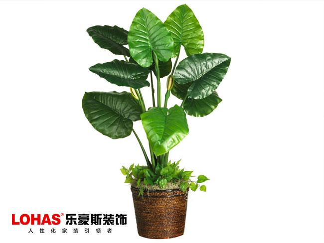 欧式装修室内适合摆设哪几种植物呢?