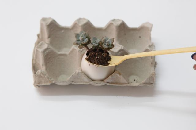 家居diy:蛋壳多肉盆栽制作步骤 手工diy制作蛋壳盆栽