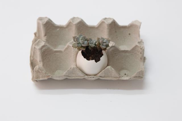 平时见到的多肉植物大多都种在小盆中,其实可以利用家中的鸡蛋壳给多肉植物安个家。今天装修网小编就教大家手工家居DIY制作蛋壳微盆景。学会后就可以制作属于你的蛋壳花园,给生活添一点绿。   【手工名称】:蛋壳多肉盆景   【主要材料】:蛋壳 ,多肉植物,土   【工具】:小镊子 小勺子 小铲子(或者类似功能的工具)   【注意事项】给鸡蛋打孔时,注意手的力度,不要损坏鸡蛋的外壳   作品展示