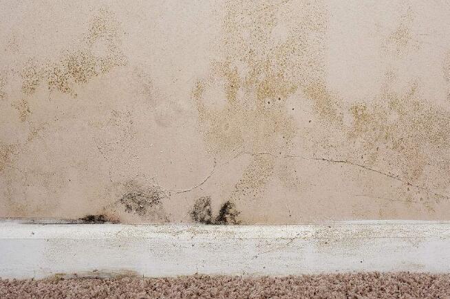 墙体霉菌的危害