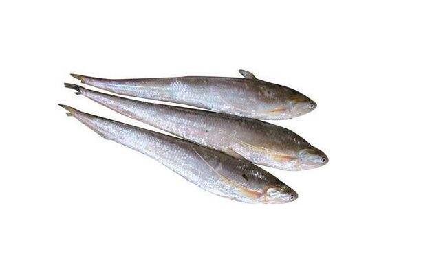 刀鱼的营养价值