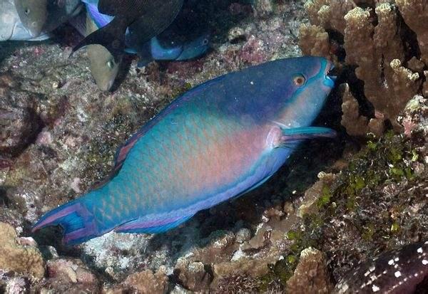 壁纸 动物 海底 海底世界 海洋馆 水族馆 鱼 鱼类 600_413