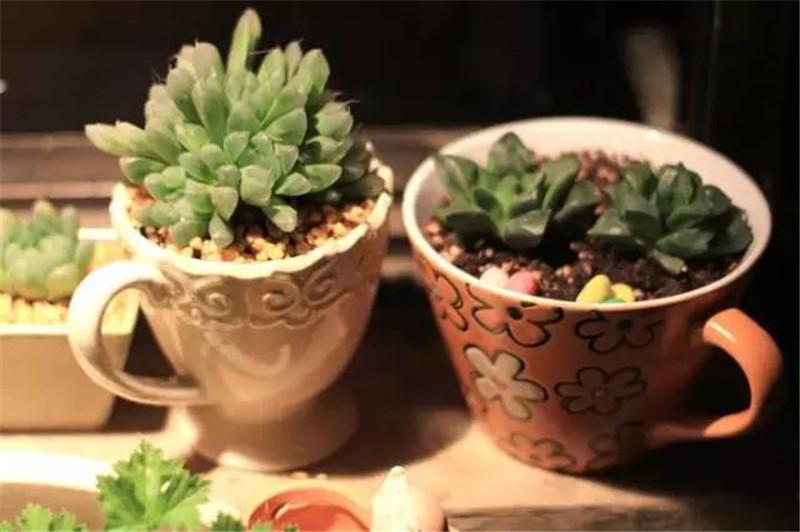 简单植物图片大全可爱