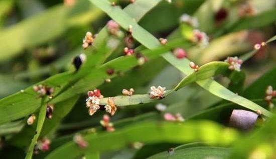 木本植物是指根和茎因增粗生长形成大量的木质部,而细胞壁