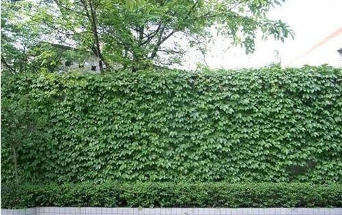 壁纸 成片种植 风景 植物 种植基地 桌面 500_315