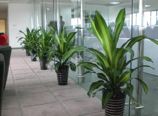 办公室绿植摆放_办公室绿植有哪些种类?办公室绿植摆放_装修保障网