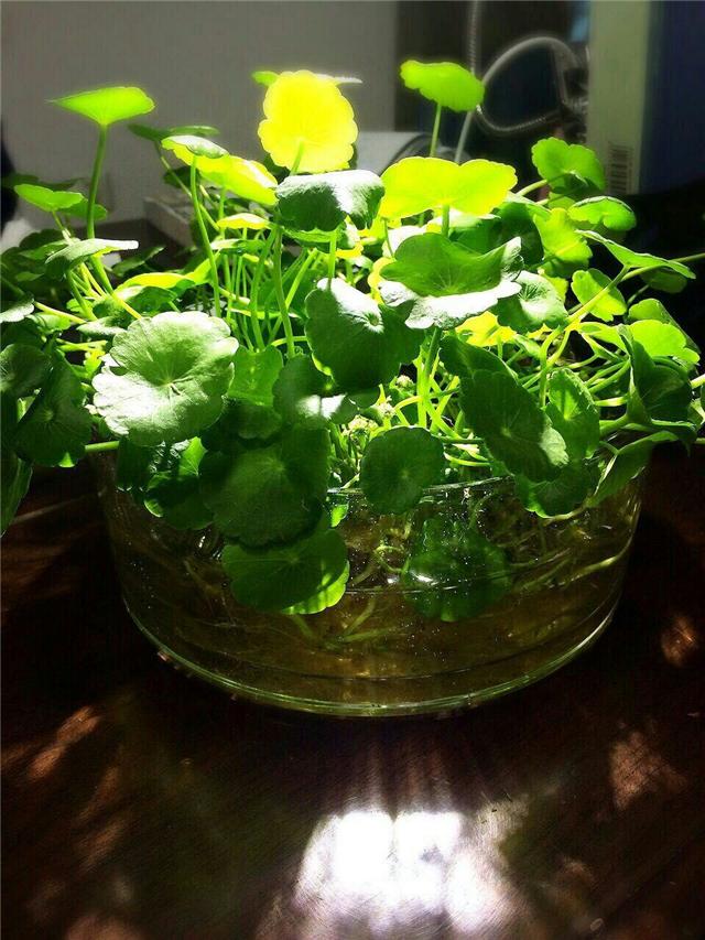 水生植物有哪些 水生植物怎么养