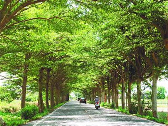 行道树的作用 行道树有哪些