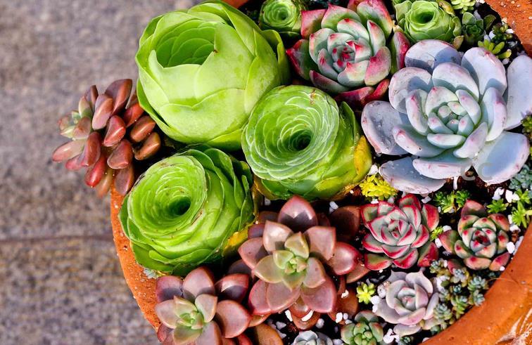 二、家中植物的风水   1、金钱树   常年是绿色,个头挺大的,能够通过光合作用吸收有毒气体,原产于热带非洲,金钱树叶质厚实、叶色光亮,宛若一挂串连起来的钱币,因此大家都叫此树为金钱树。   2、君子兰   是一种多年生草本植物,此花一般在春节元旦时期开放,是一种温室花,君子兰叶子颜色苍翠并且有光泽,花朵朝上形状像火炬,花朵颜色呈橙红,端庄而大方,是美化环境非常好的花卉,垂笑君子兰花朵下垂,含蓄深沉,高雅肃穆,另有一番韵味。   3、兰花   兰花是多年草本植物,根部像筒状,兰花也是中国的传统名花,以