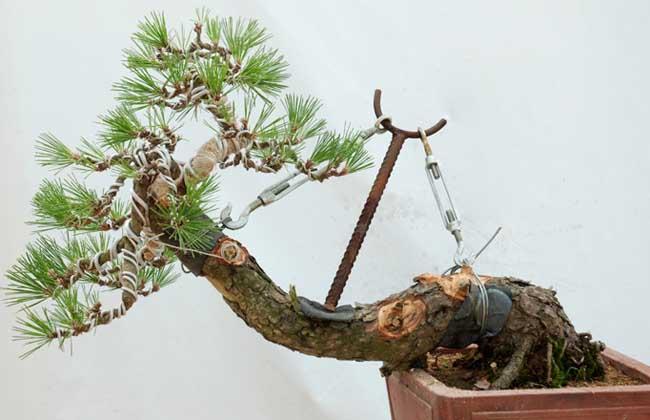 奇形树桩盆景图片