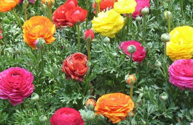 水溶彩铅画花卉步骤