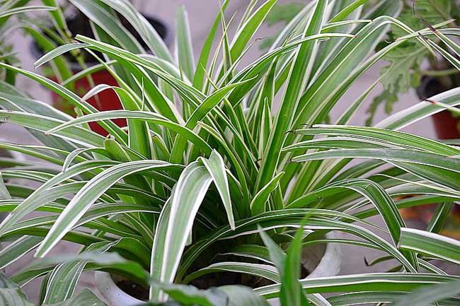 植物生长步骤分开