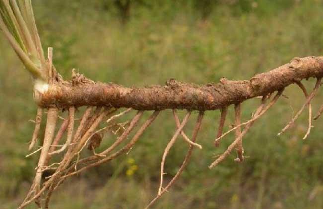 药材种植基地专用有机肥-知母专用肥