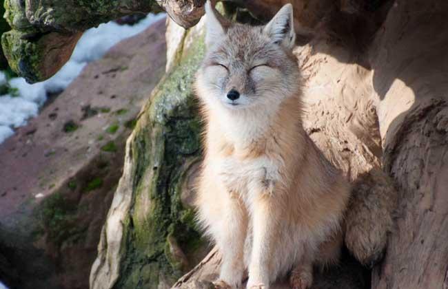 野生动物保护法》