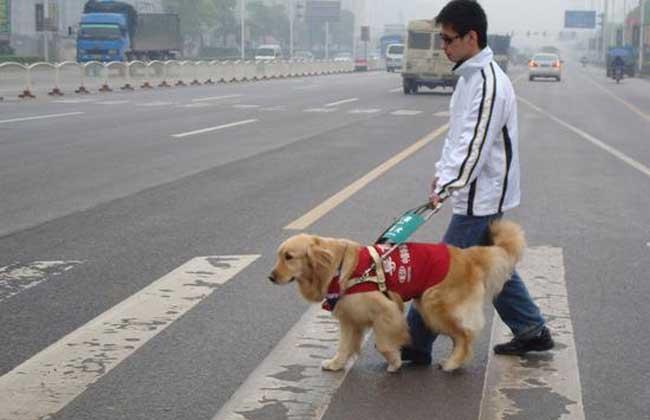 导盲犬品种_护卫犬品种_比特犬品种