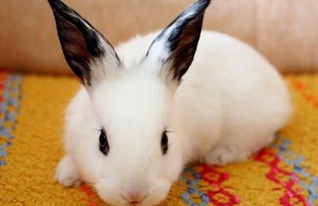 公主兔 可爱_百度图片搜索