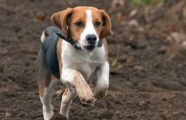 老婆与狗的情色生活_壁纸 动物 狗 狗狗 650_420