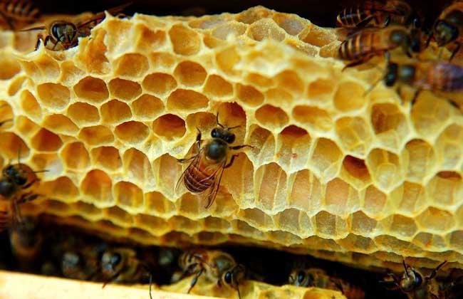 蜂蜜的真假鉴别   1、掺水蜂蜜:用一根筷子垂直地插入蜂蜜中,提起来滴在毛边纸上。如是真的蜂蜜,则毛边纸上的蜜将是一粒珠子,如是掺了水的蜂蜜,其滴下的蜂蜜将会向四周扩散。   2、掺入饴糖:饴糖也叫麦芽糖,掺入饴糖的蜂蜜不容易结晶。取少许蜜放于玻璃杯中,加入4倍的水,混匀,然后逐滴加入医用酒精,掺有饴糖者出现许多白色絮状物,否则略呈浑浊,而没有絮状物。   3、掺入蔗糖:蜂蜜在4至14摄氏度的环境下保存一段时间后会变成固体,蜂蜜购买后放于冰箱保鲜层中,24小时候观察结晶现象,真蜜用手捏其结晶体很快溶化