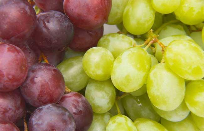 提子的营养价值 提子的食用禁忌     提子别称美国葡萄,美国提子等