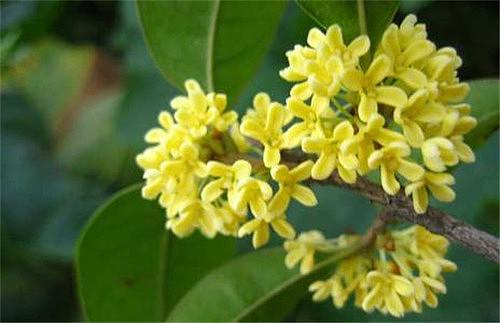 秋天盛开的花有哪些啊 哪些花适合在秋天播种