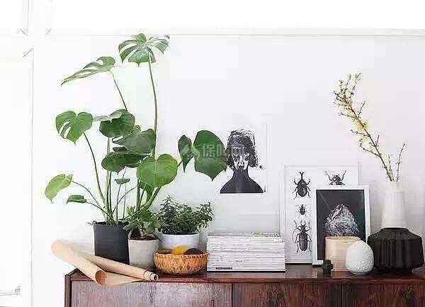 3、绿萝   想要一家人身体健康,就在玄关柜上放一盆绿萝吧!绿萝是一种生命力极其顽强的草本植物,有水即能生长,又被称为生命之花,有坚韧善良的美好寓意。而且绿萝有吸收有害气体、释放氧气和空气流通作用,将其摆放在玄关有利于净化空气,对家庭成员的健康有利。   4、蝴蝶兰   风水学上,蝴蝶兰能够促进夫妻感情。在玄关放一盆蝴蝶兰,不仅能美化和净化家居,还有美妙的花语和寓意,在风水学的角度上有一定的促进作用。有仕途顺畅和幸福美满的意思,这一点是相信是所有年轻夫妇的愿望,种上一株红色蝴蝶兰,给你们的婚姻是仕