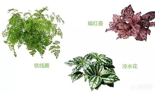 室内植物搭配指南