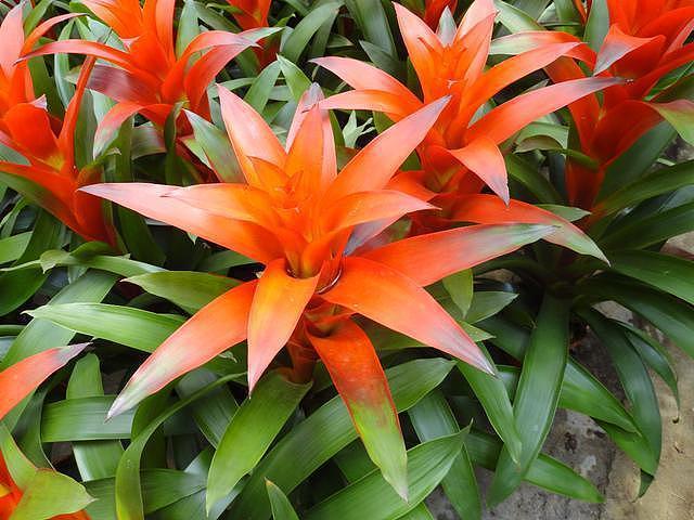 室内种植什么植物好 这15种不需阳光也能养得好