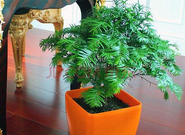 办公室摆放什么植物好