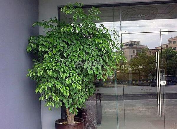 办公室摆什么植物招财
