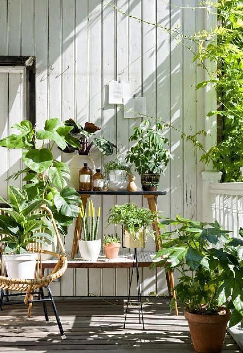 植物不吸收肥料怎么办 试试叶面施肥