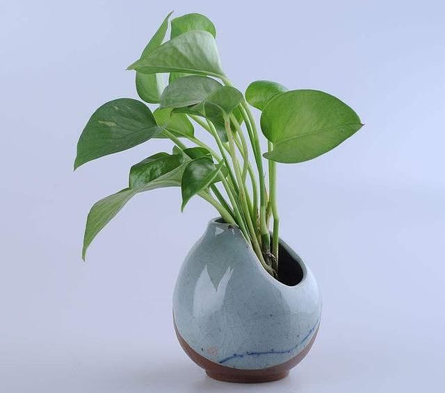 室内最好养的植物排名