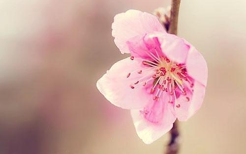 风水桃花位在哪里